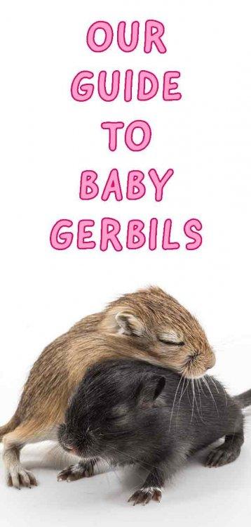 baby-gerbils-tall.thumb.jpg.41651003f129e8a72702f8fdd21875ee.jpg