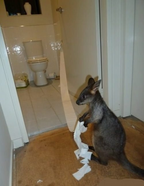ToiletKangaroo1.jpg.898fac0feb43783bd8e0304b121b59f1.jpg
