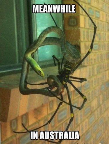 Spidersnake.jpg.46d230e757dc1159231c713ebf10fcbb.jpg
